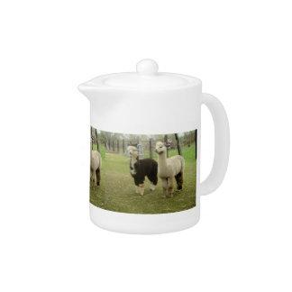 Two Alpacas Teapot