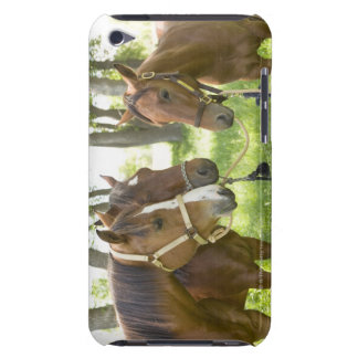 Two American Quarter horses standing in shade iPod Touch Cover