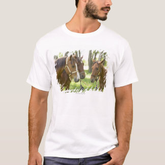 Two American Quarter horses standing in shade T-Shirt