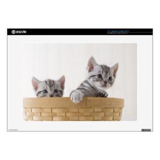 Two American Shorthair Kittens Laptop Decal