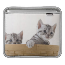 Two American Shorthair Kittens Sleeve For iPads