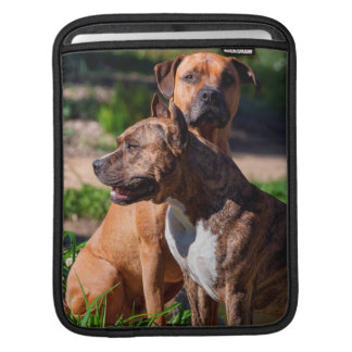 Two American Staffordshire iPad Sleeves