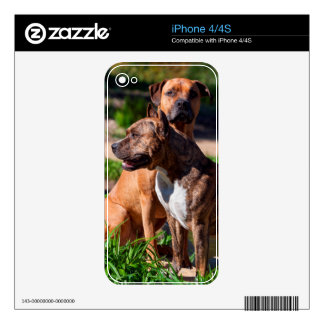 Two American Staffordshire Skin For iPhone 4S