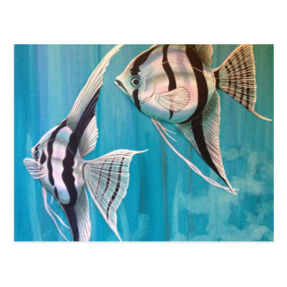 Two angel fish with silver and black and blue postcard
