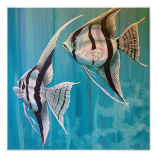 Two angel fish with silver and black and blue poster
