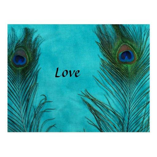 Two Aqua Peacock Feathers Postcard