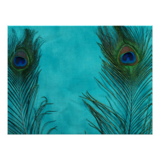 Two Aqua Peacock Feathers Poster