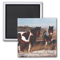 Two Assateague Wild Horses - Magnet