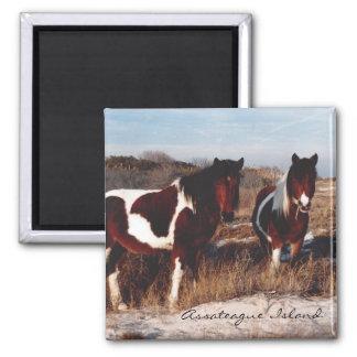 Two Assateague Wild Horses - Magnet
