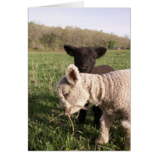 Two Babies Greeting Card