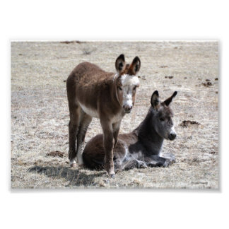Two Baby Donkeys 5x7 Photo Print