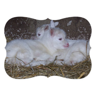 Two Baby Goats in Straw Card