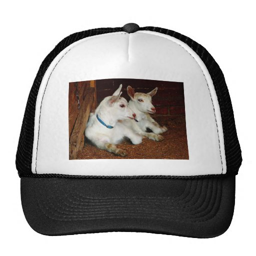 Two Baby Goats Trucker Hat