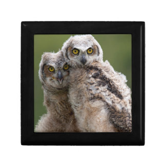 Two Baby Great Horned Owls Perching On A Branch Jewelry Box