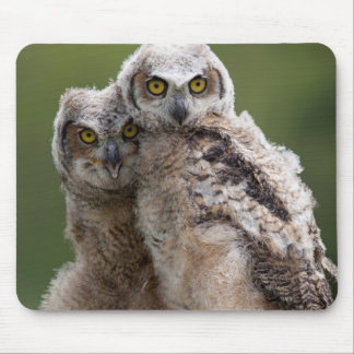 Two Baby Great Horned Owls Perching On A Branch Mouse Pad