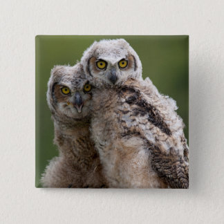 Two Baby Great Horned Owls Perching On A Branch Pinback Button