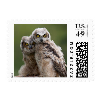 Two Baby Great Horned Owls Perching On A Branch Postage