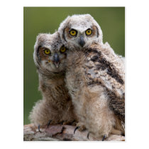 Two Baby Great Horned Owls Perching On A Branch Postcard