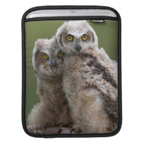 Two Baby Great Horned Owls Sleeve For iPads