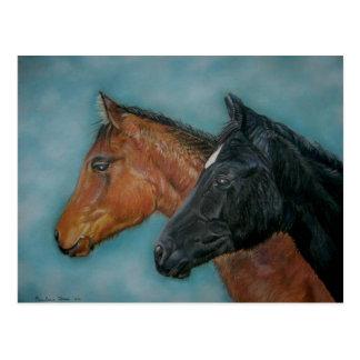 Two baby horses black foal chestnut foal portrait postcard