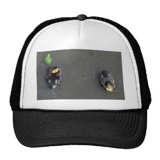 Two Baby Mallards & A Green Leaf Trucker Hat