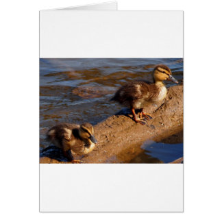 Two Baby Mallards Hanging out on a Log Card