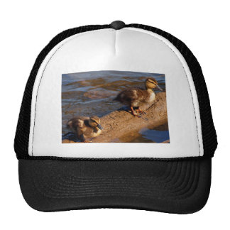 Two Baby Mallards Hanging out on a Log Trucker Hat