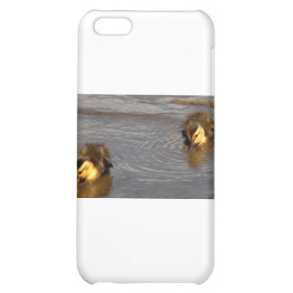 Two Baby Mallards iPhone 5C Cover