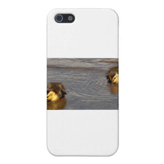 Two Baby Mallards Cover For iPhone 5