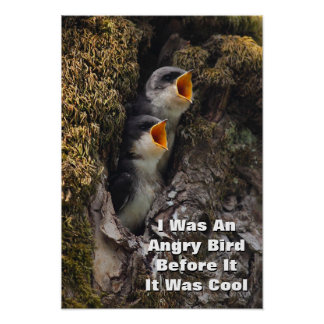 Two Baby Tree Swallows Poster