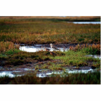 Two Bar-Tailed Godwits Photo Cut Out