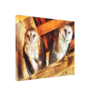 Two Barn Owls Canvas Print