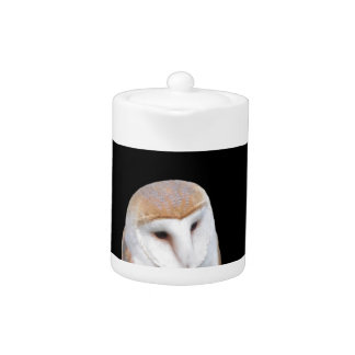 Two barn owls isolated on dark background teapot
