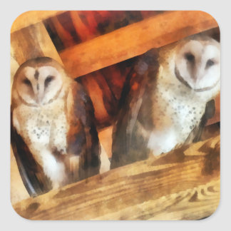 Two Barn Owls Stickers