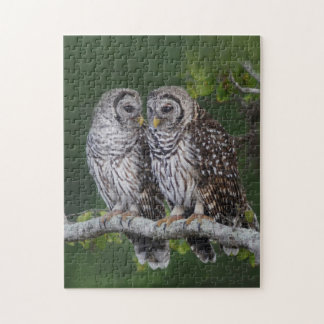 Two Barred Owl Fledglings - Birder's Puzzle