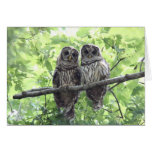 Two Barred Owls Greeting Card