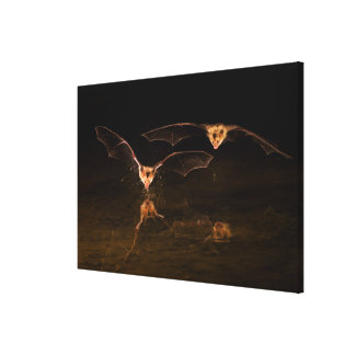 Two bats flying over water, Arizona Canvas Print