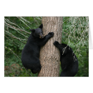 two bears in a tree card