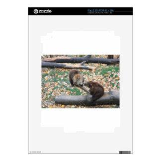 Two bears iPad 2 skin