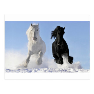 two beautifil horses black and white run in snow postcard