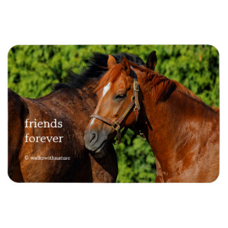 Two Beautiful Chestnut Horses in the Sun Magnet