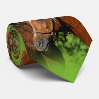 Two Beautiful Chestnut Horses in the Sun Tie