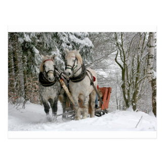 Two Beautiful white Horses drawing a Sledge Postcard