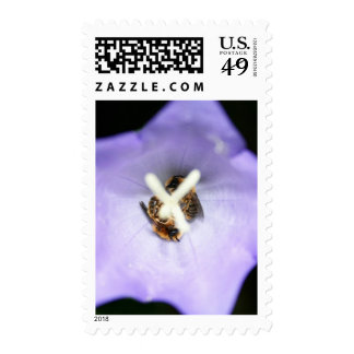 Two bees sleeping in a purple flower postage