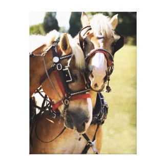 Two Belgian Draft Horses Canvas Print