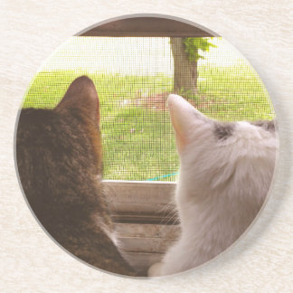 Two BFF Cats Gazing Out of The Window Beverage Coasters
