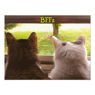 Two BFF Cats Gazing Out of The Window Poster Photo Print