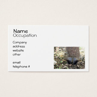 Two Big Moths Business Card