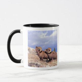 Two bighorn rams Ovis canadensis) on grassy Mug