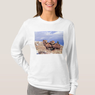 Two bighorn rams Ovis canadensis) on grassy T-Shirt